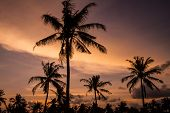 Palm Trees At Sunset Time.