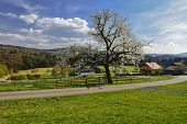 Spring in the Czech countryside