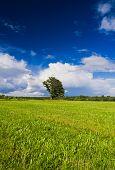 Field Landscape Calm Solitude