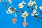 Pink wood hearts hanging from pear tree branch with blossoms