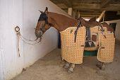 Lancer Horse