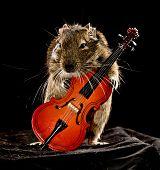 Musical Degu