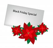 Lovely Red Poinsettia Flowers with Black Friday Letter