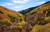 Autumn Leaves in Canyon