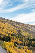 Autumn Colors in Alpine Mountains