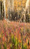 Glowing meadow in Autumn