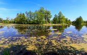 Summer scene on swamp in forest