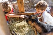 two kids - boy and girl - taking care of domestic animals on farm