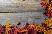 fall leaves on a table