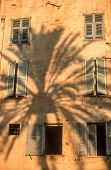 Shadow Of A Palm Tree