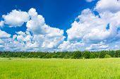 Field Freedom Growth Season