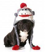 french bulldog wearing winter hat