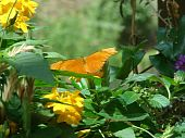 bright orange butterfly on plant