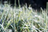 pic of morning  - close up photo of frosty morning grass chilling morning in fall - JPG