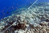 Coral Reef Destroyed By The Mooring Line