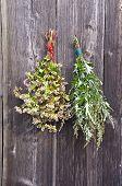 Buckwheat And Medical Mugwort Artemisia Vulgaris Bunch On Old Wall
