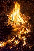 pic of bonfire  - Bonfire burns at night among dry grass - JPG