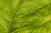 Leaf Of A Plant Close Up In The Summer