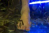 foto of fish skin  - Pedicure fish spa feet wellness skin care treatment - JPG