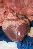 Coração de porco