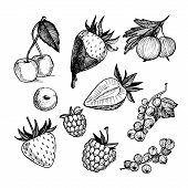 Hand-drawn Vector Illustration. Collection Of  Berries. Isolated On White Background.