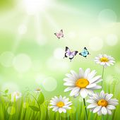 stock photo of butterfly flowers  - Summer meadow background with white daisy flowers and butterflies vector illustration - JPG