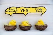 image of feathers  - Three Sitting Easter Chicks In Easter Baskets Or Nest With Yellow Feathers On White Wooden Background With Comic Speech Balloon Telling A Easter Joke For Happy Easter Greetings Or Easter Decoration - JPG