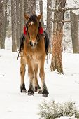 Pony On Snow