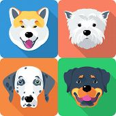 image of puppy dog face  - Vector dog Akita Inu - JPG