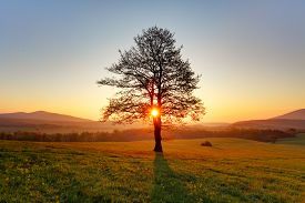 image of spring-weather  - Spring landscape with tree and a sun - JPG
