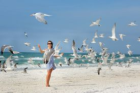 stock photo of flock seagulls  - Young beautiful woman watching the seagulls flying - flock of birds, Siesta Key beach, Florida