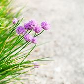 stock photo of chive  - natural background  - JPG