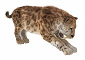 pic of saber-toothed  - 3D digital render of a big cat sabertooth isolated on white background - JPG