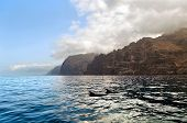 pic of dolphin  - Dolphins at the south coast of Tenerife - JPG