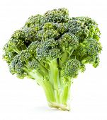 stock photo of grub  - Broccoli closeup - JPG