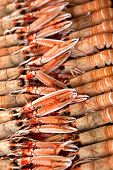 picture of stall  - Close up on langoustines on a stall in a fish shop - JPG
