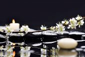 image of black-cherry  - Still life with cherry blossom with candle on black stones - JPG