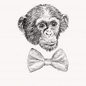 stock photo of silkscreening  - Sketch Monkey Face With Bow Tie - JPG