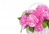 pic of carnation  - Pink carnations in a basket isolated on white background - JPG