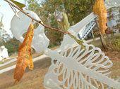 Skeleton In Leaves