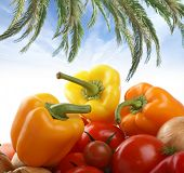 Diferentes verduras sabrosas aisladas sobre fondo blanco