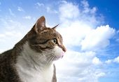 Head of big fat cat over sky background
