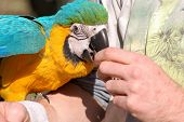 Parrot Eating From Hand