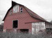 Red Barn On Black & White
