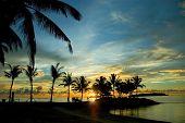 Pôr do sol e palmeiras