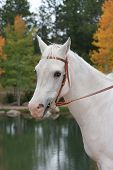 White Horse By Lake