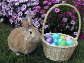 stock photo of easter bunnies  - pet rabbit sitting next to a basket filled with eggs - JPG