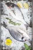 Chilled Raw Dorado In The Ice. Top View, Copy Space. Advertising For The Market poster