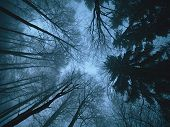 Spooky Night In Winter Forest Covered By Snow. The Road Through Frozen Forest With Snow, A Snowy Win poster
