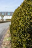 Close Up Of Plant Bush With Street Background Scene poster